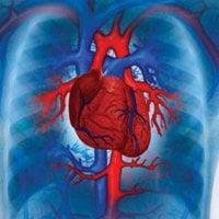 Ембриология на сърдечно-съдовата система