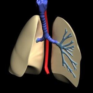 Анатомо-физиологични особености на дихателната система