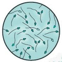Физиологична последователност на еякулацията