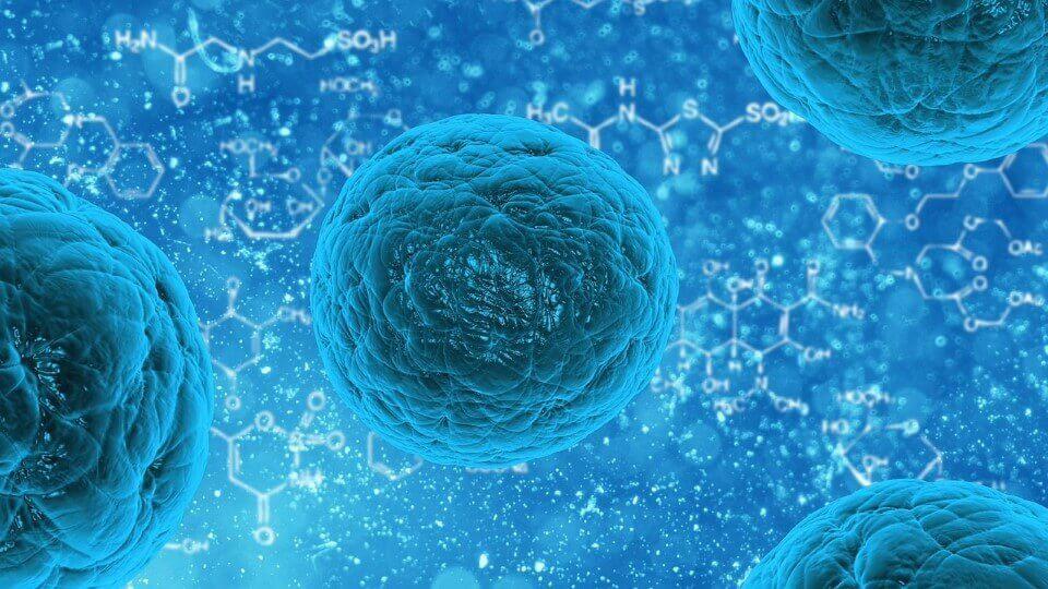 Какво е важно да знаем за стволовите клетки?