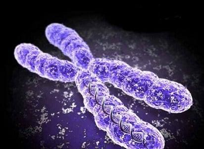 Генетични аномалии при яйцеклетките – част 3