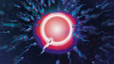 Photo of Какво представлява самата процедура по дарение на яйцеклетки